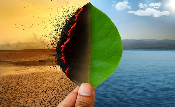 Plant Leaf In Two Different Variation - Representing Climate Change Due To Gloabal Warming Concept.
